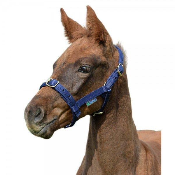 Bucas Halter Dublin, Nylon Halter, Foal Halter